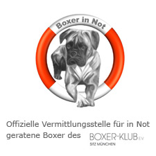 Boxer-Klub E.V. Boxer in Not